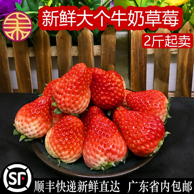 丹东红颜草莓牛奶奶油大草梅2斤 礼盒 孕妇新鲜水果当季现摘包邮