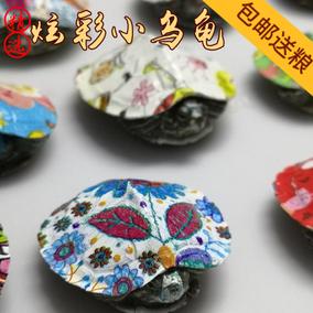 小烏龜活體網紅炫彩龜小情侶寵物龜