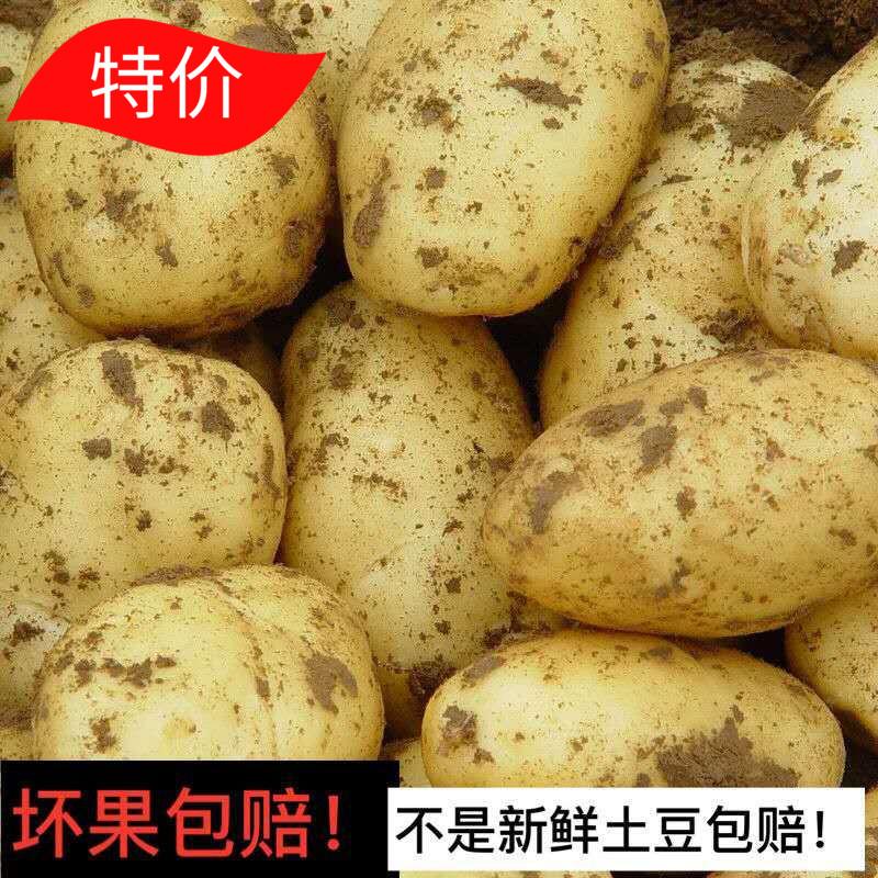 山东省蔬菜土豆新鲜农家马铃薯黄心洋芋现挖5斤包邮 孕妇宝宝辅食