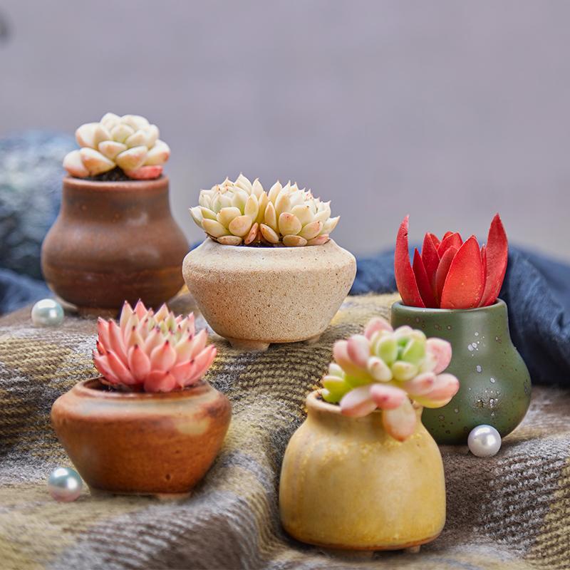 Прекрасный обещание сад Y358 серия керамический цветок бассейн керамика классическая творческий больше мясо завод комнатные цветочный горшок