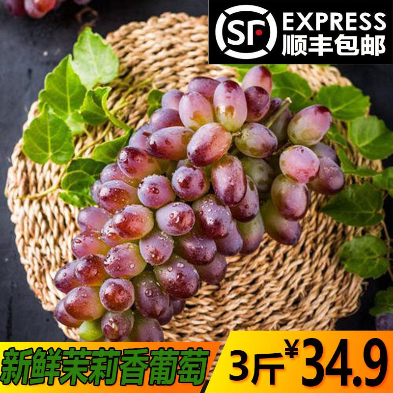 现货茉莉香葡萄应季新鲜水果郁金香葡萄3斤非无籽玫瑰香顺丰包邮