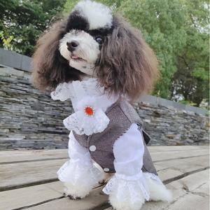 小熊泡沫宠物公狗衣服灰白西服衬衣两件套领结套装可定制包邮