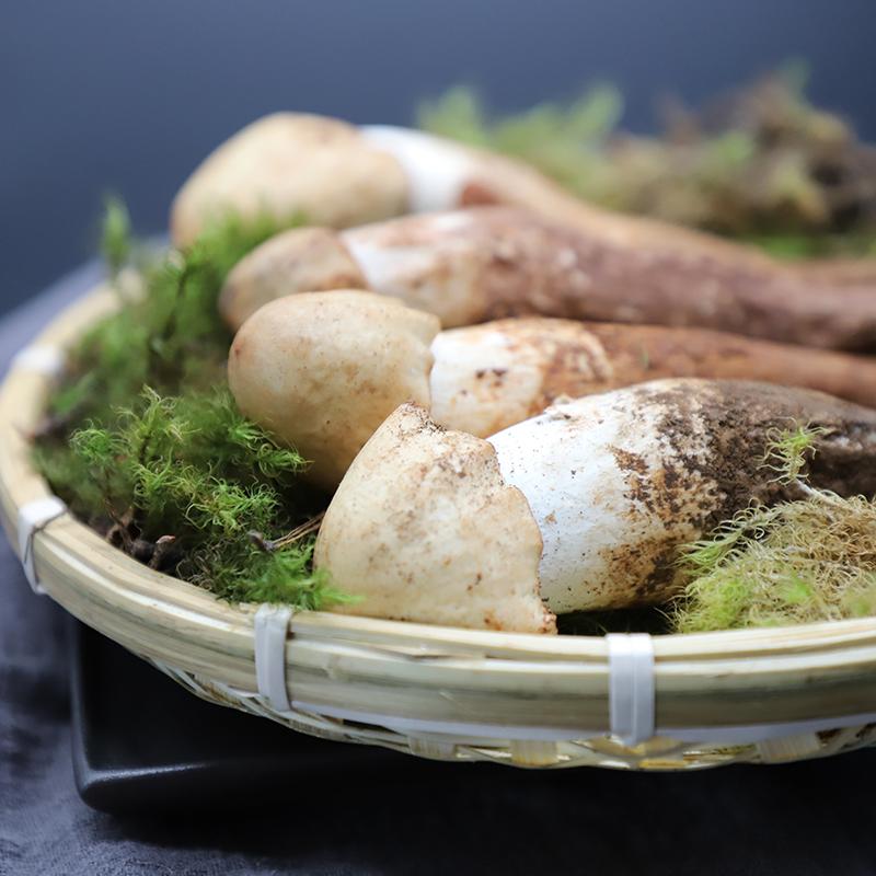 拾蘑菇 云南野生白鸡枞菌 荔枝菌鸡纵棕蘑菇菌子炸油鸡枞500g包邮