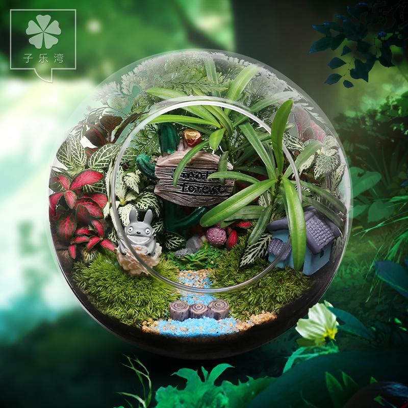 苔藓微景观植物生态瓶迷你盆栽diy龙猫礼物摆件小盆栽植物可爱