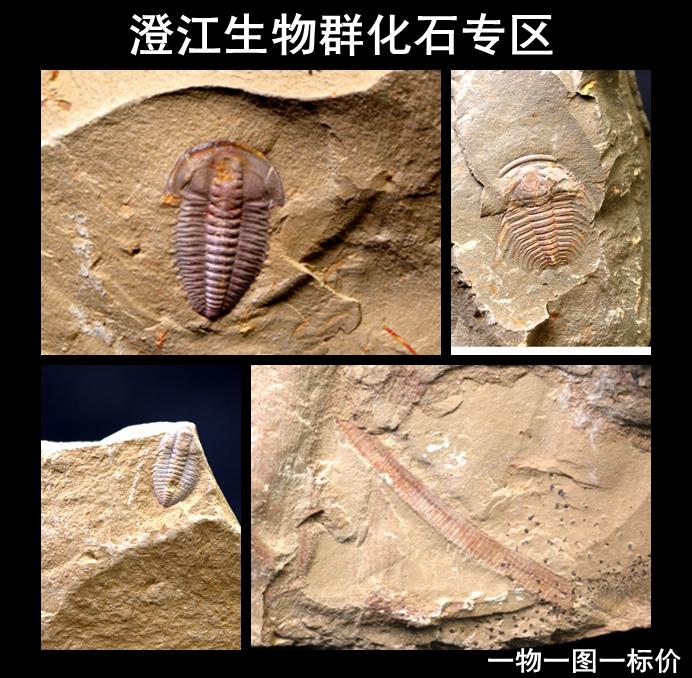 Ископаемые Артикул 562844184282