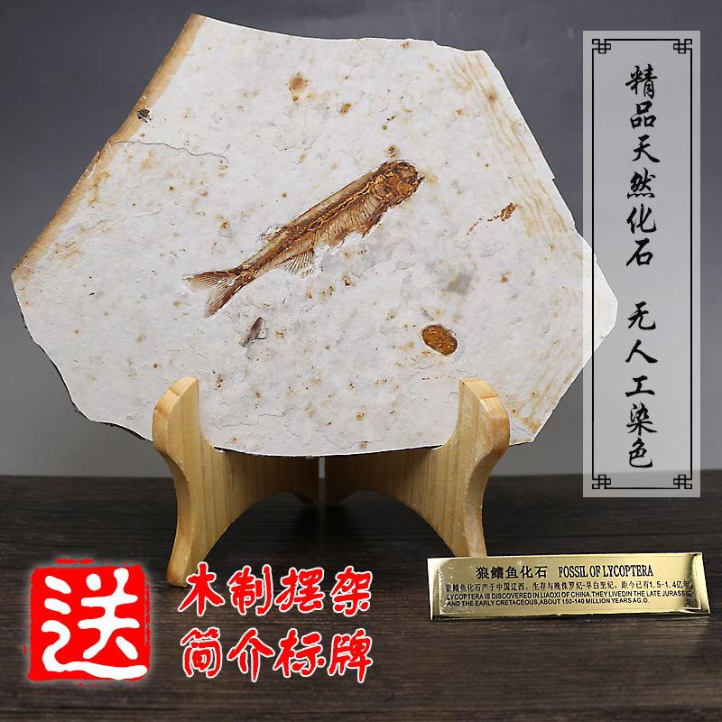 Ископаемые Артикул 9646689749