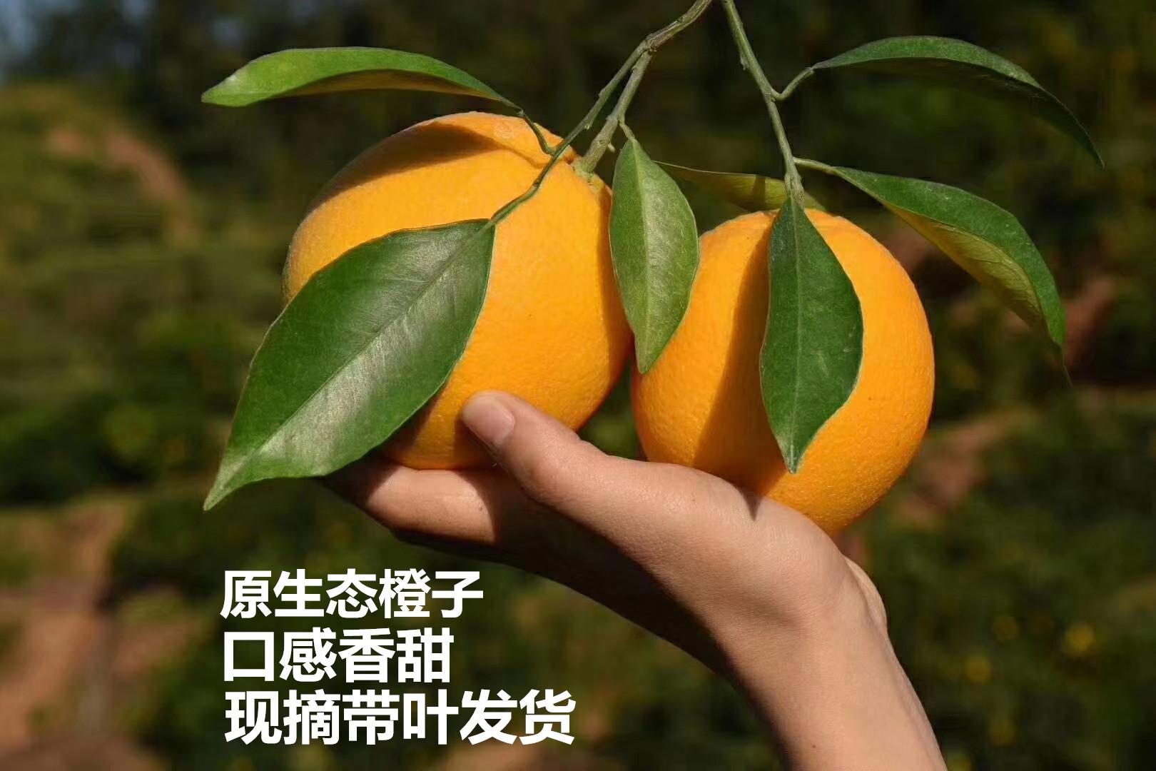 新鲜现摘甜橙子5斤湖北宜昌秭归夏橙非伦晚脐橙手剥手掰橙子春橙