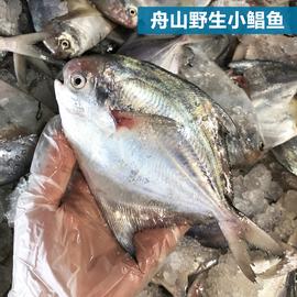 舟山海鲜野生鲳鱼 冷冻 银鲳鱼 流网鲳鱼,一斤7-8条图片