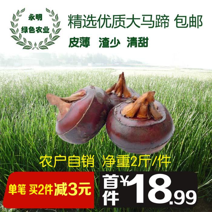【精选特大果2斤/件】新鲜马蹄广西桂林特产蔬菜荔浦优质马蹄荸荠