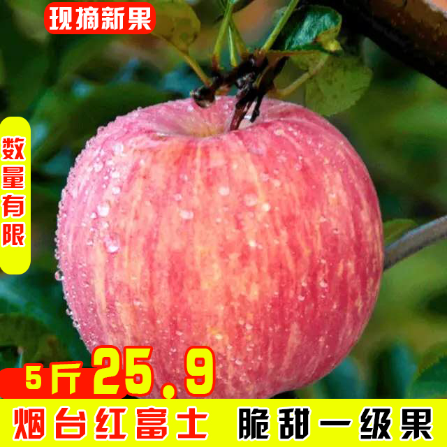 Red Fuji apple from Yantai, Shandong Province in the current season