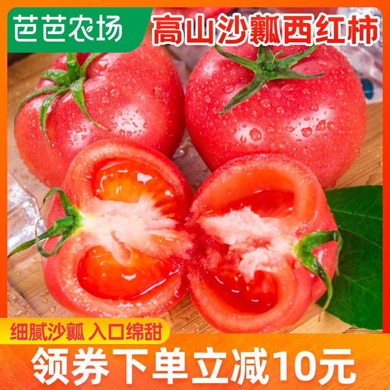 农场 攀枝花沙瓤番茄普罗旺斯新鲜自然熟生吃水果西红柿3斤包邮