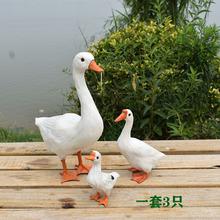 真羽毛仿真鹅大白鹅鸡鸭鹅动物模型家禽标本庭院园林摆件拍摄道具