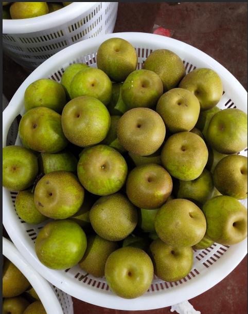 果园直发庄行蜜梨10斤翠冠梨350克-400克水果上海蜜梨子焦溪蜜梨