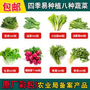 四季易种8种青菜叶菜菠菜蔬菜种子