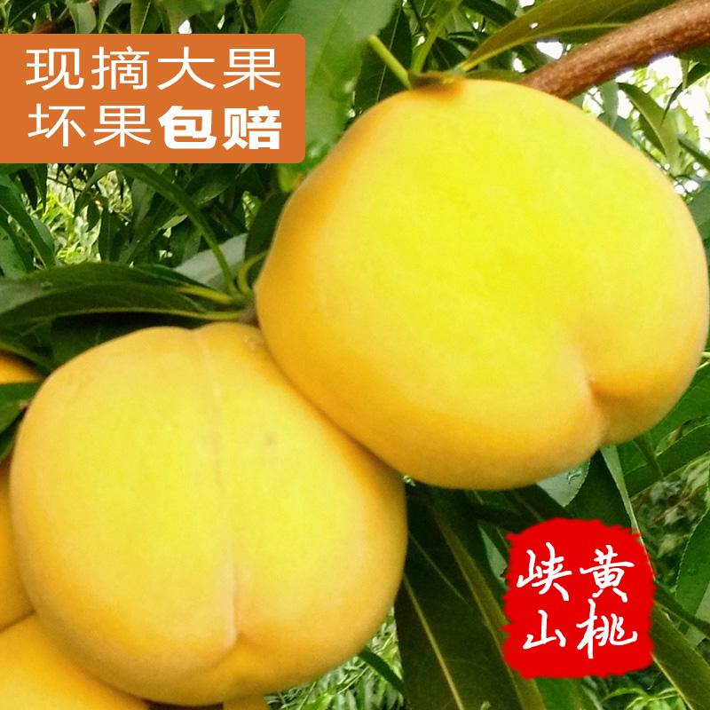 现货新鲜黄桃5斤新鲜水果桃子应季水果做黄桃罐头大黄桃现摘现发