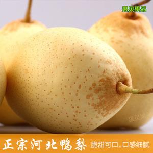 河北鸭梨水晶梨5斤新鲜梨子冰糖梨赵州特产农家水果包邮非天津