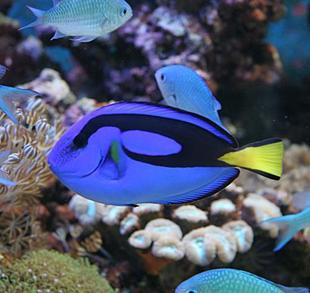 Sea creatures live marine fish Indonesia coral blue crane stock for immediate update