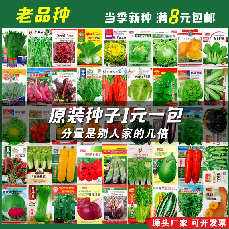 蔬菜种子四季播种阳台农家庭院盆栽辣椒番茄黄瓜韭菜香菜草莓籽夏