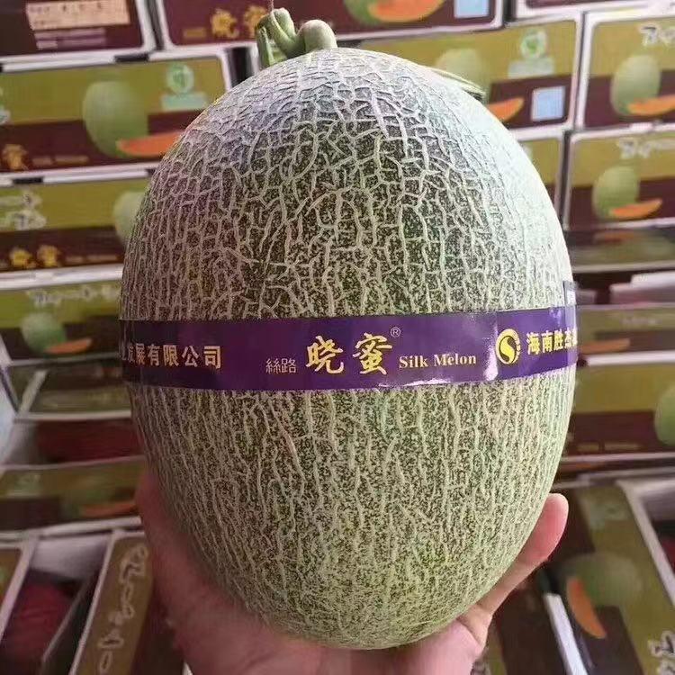 海南丝路晓蜜冰糖蜜瓜个新鲜孕妇水果瓜中之王 单果4.5-5斤左右