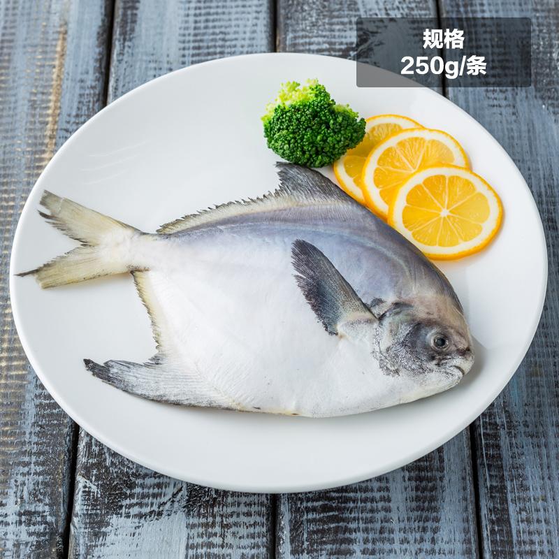 ~天貓超市~東海鯧魚250g1條裝 冰凍海鮮 東海特產
