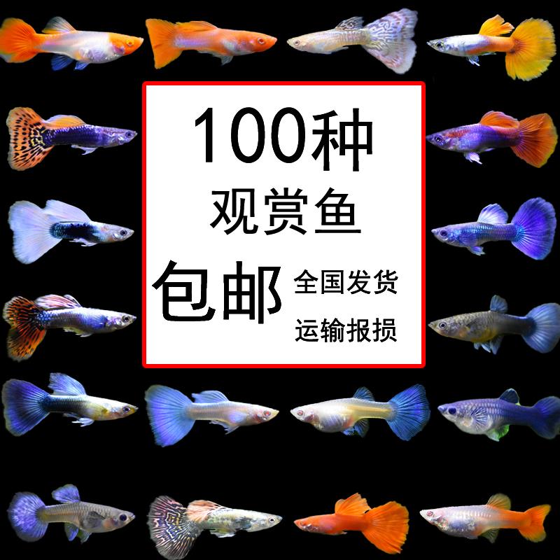 Рыбы Артикул 45616720869