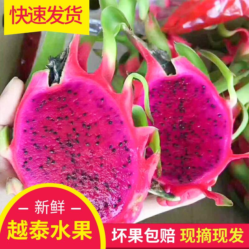 (用1元券)全年大量出售特价红心火龙果5斤装 农家自种 越南火龙果