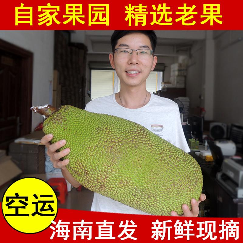 【四季果鲜】海南三亚新鲜木菠萝 菠萝蜜 马来西亚6号 整个卖包邮