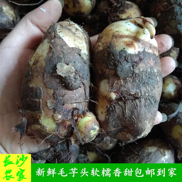 长沙农家 【5斤装】农民自种新鲜蔬菜芋头小毛芋芋艿粉糯香甜香芋