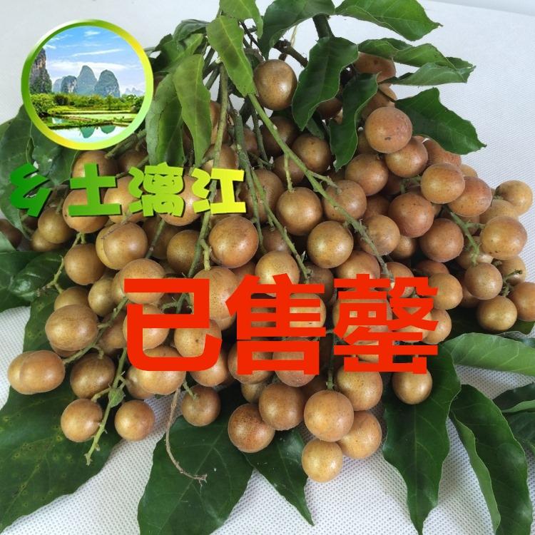 桂林黄皮果新鲜美味黄枇现摘现发黄坛子原生态野生黄弹子孕妇水果