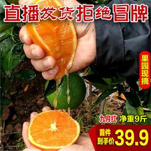 现季当季水果橙子新鲜大个手剥果冻橙秭归九月红脐橙10斤整箱应季