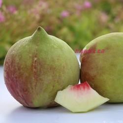 已下架水蜜桃开远蒙自绿色鹰嘴桃甜脆送礼山地生态包邮鲜桃9斤