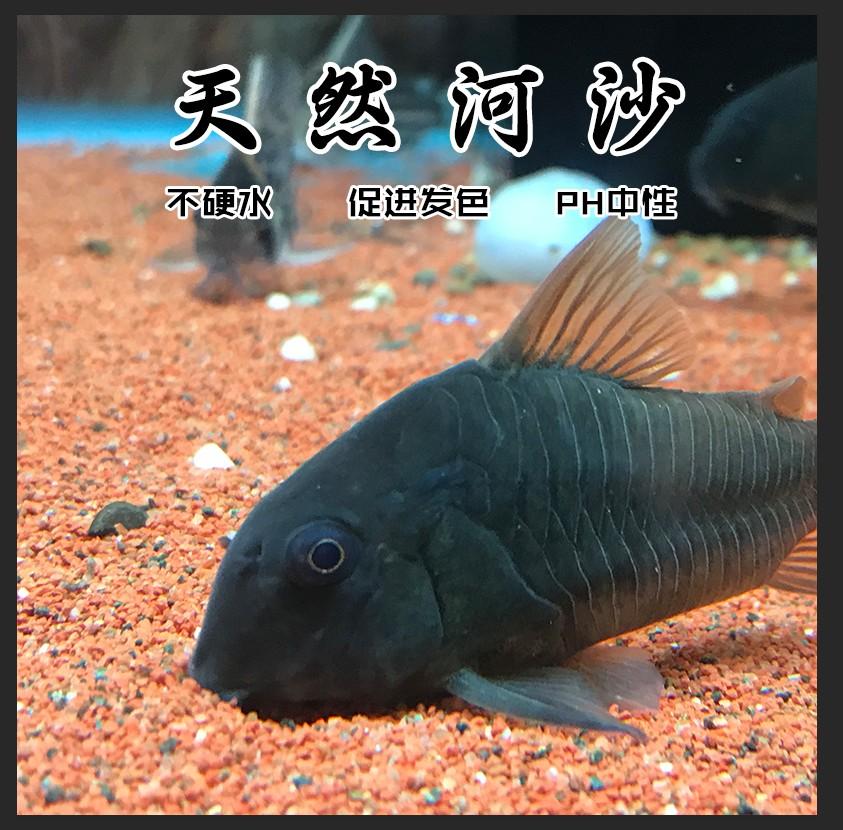 鱼缸底砂水族箱装饰沙河沙雨林沙鼠沙南美缸沙化妆砂草缸造景沙子