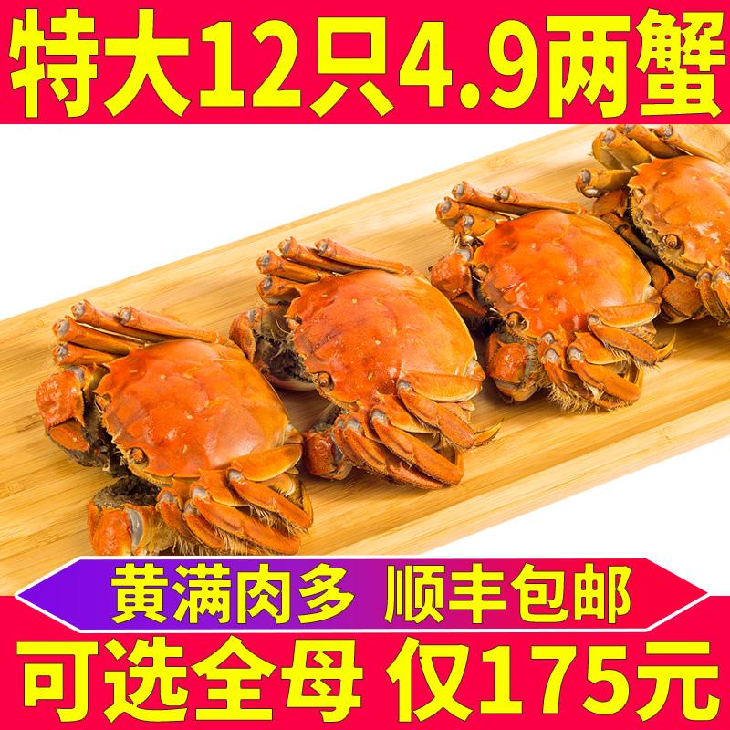 12只装鲜活大闸蟹全清水生鲜大湖蟹
