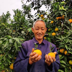 爱媛38果冻橙四川眉山手剥柑橘当季时令新鲜水果5斤爆汁包邮大果