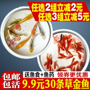 草金鱼活体龙鱼乌龟红蝶尾兰寿饲料