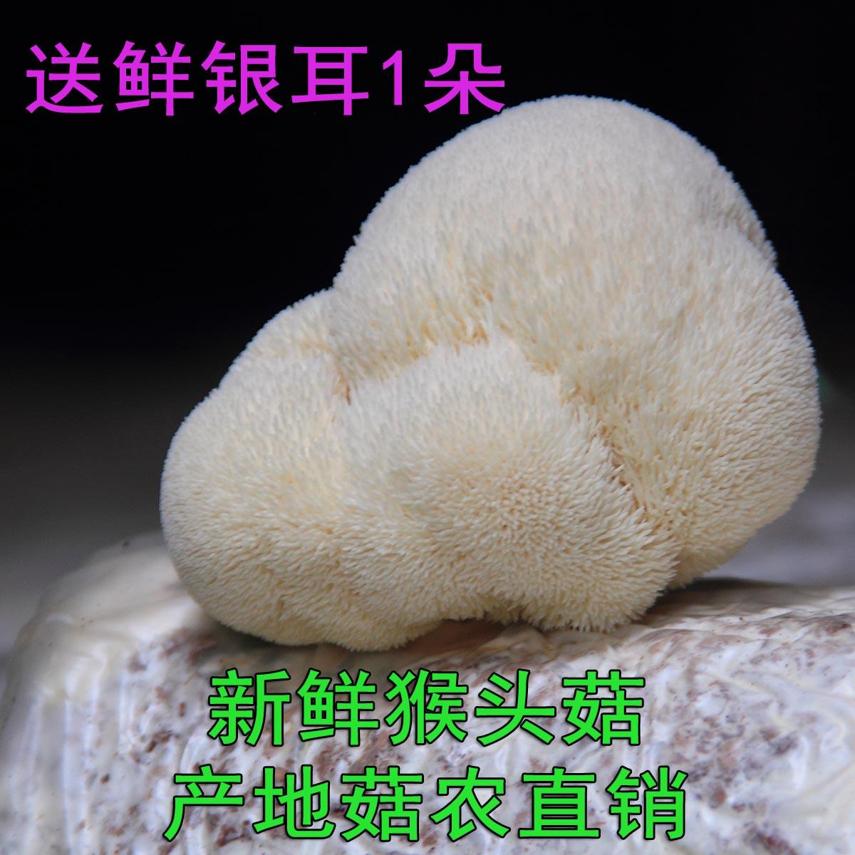 古田新鲜猴头菇生鲜活蘑菇非干货食用菌菇福建农家土特产2斤顺丰