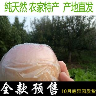 天然新鲜红富士水果整箱当季批砀山小苹果10斤包邮农家特产烟台丑