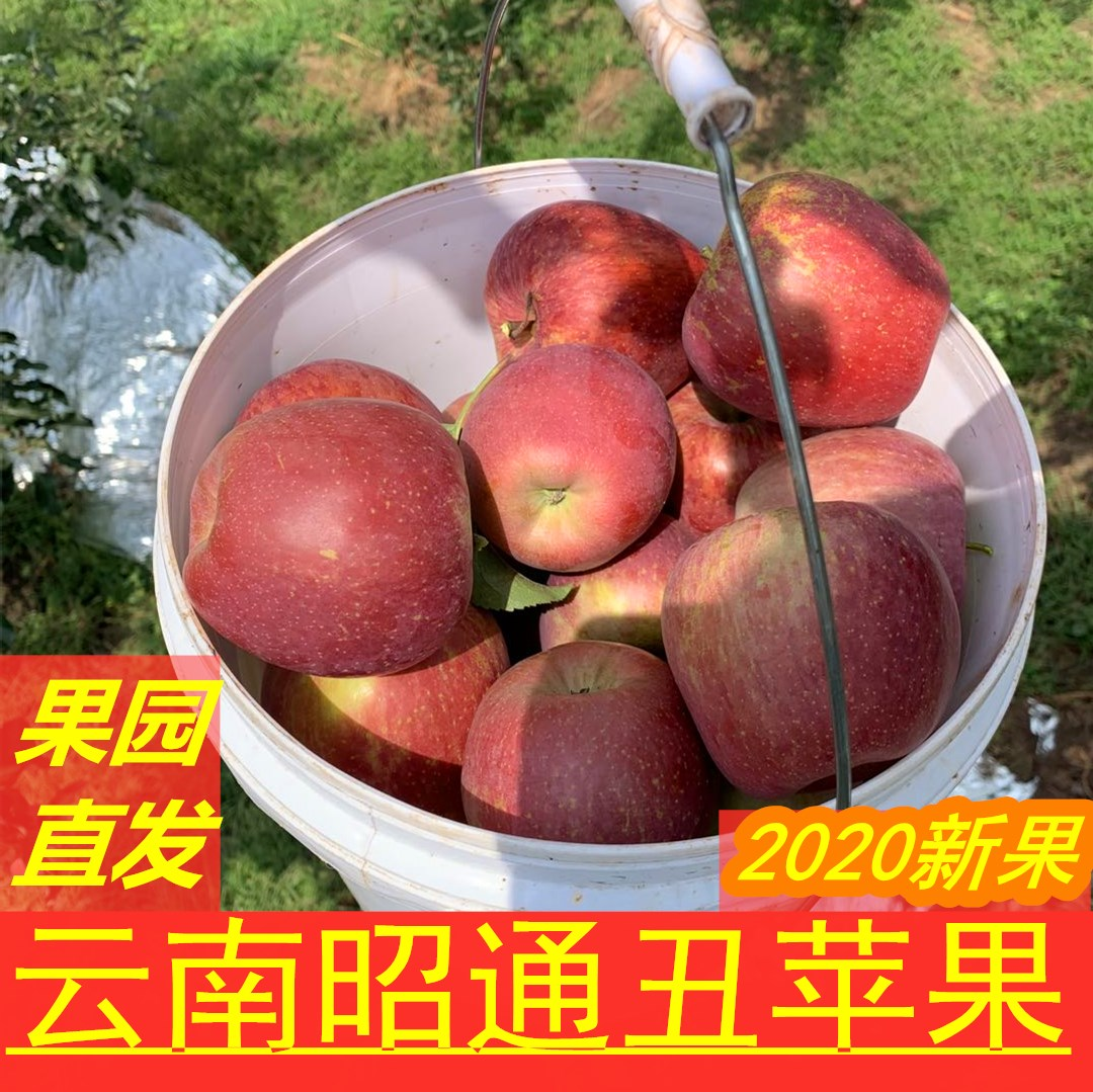 Yunnan Zhaotong fresh rock sugar Xin Chou Apple high quality fruit grade 1