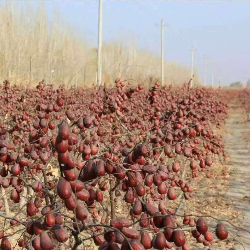 新疆特产和田兵团若枣子果零食红枣限5000张券
