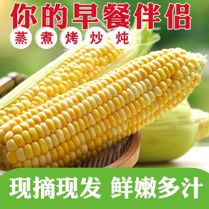 【第2件9.9两件发9斤】5斤新鲜带皮水果玉米甜脆玉米
