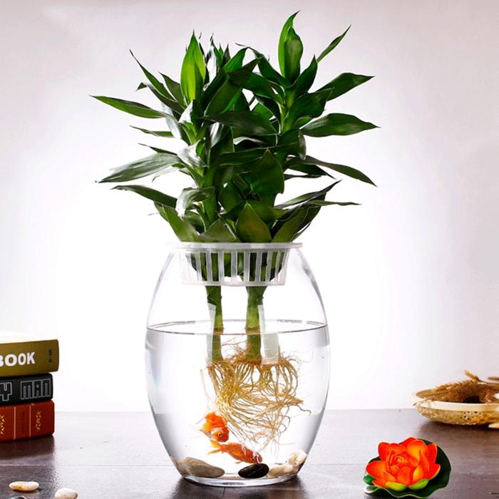 金鱼缸水培植物玻璃瓶子弹头鱼缸水养绿萝花盆办公室桌面小鱼缸