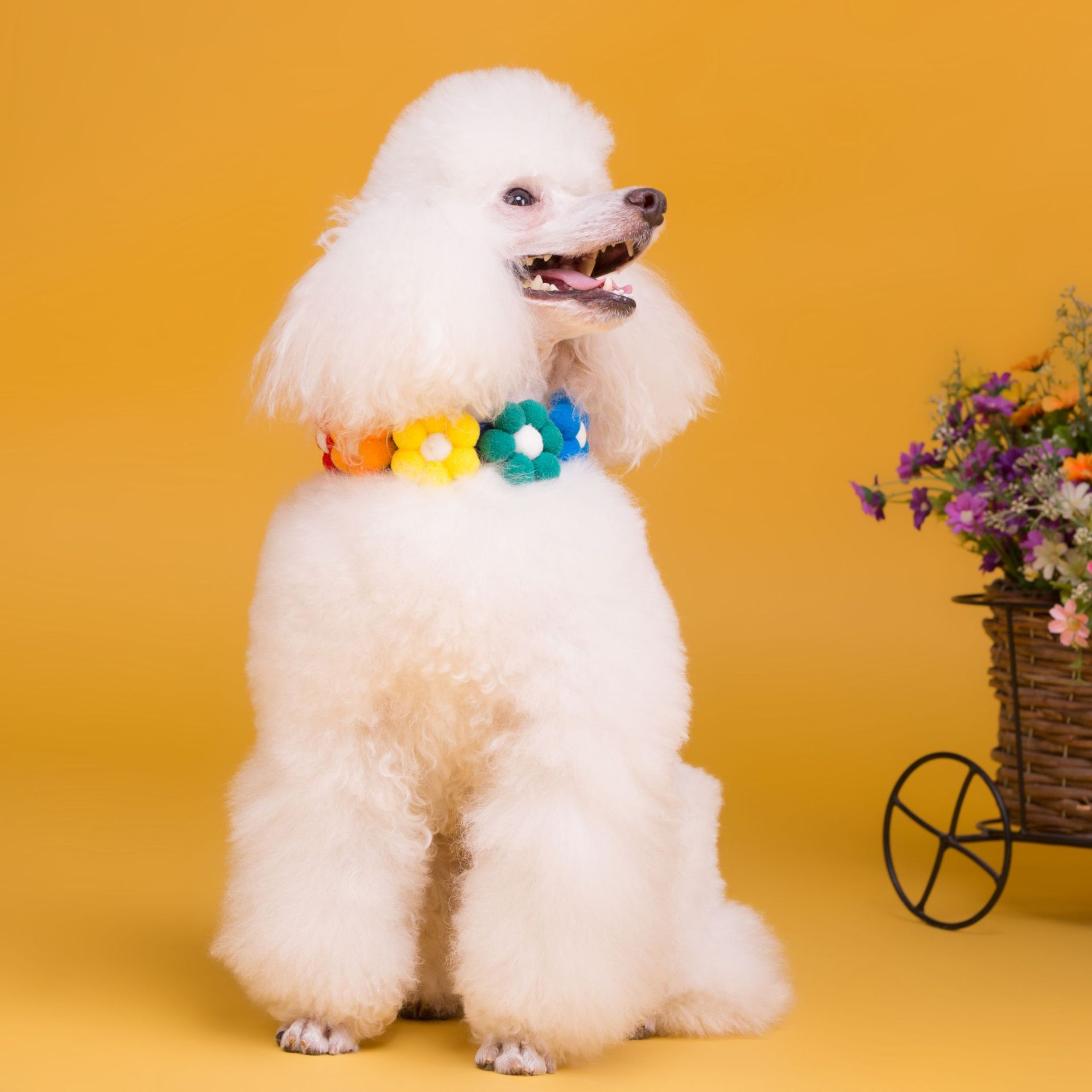 Qingyang grocery store pet collar new pet products quality Korean pet accessories pet neck accessories