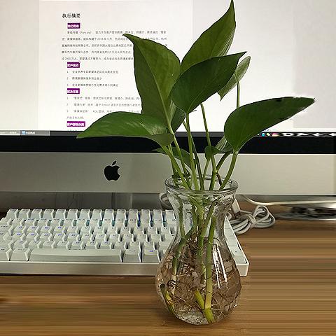 特价 风信子水培玻璃花瓶 花瓶 玻璃 透明 玻璃花瓶 水中花玻璃瓶
