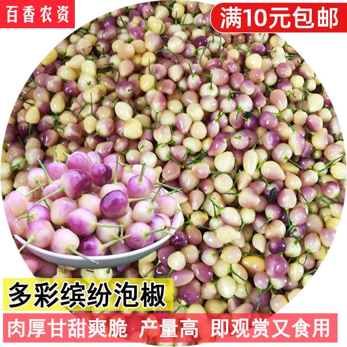 五彩小辣椒朝天椒菜籽四季盆栽观赏食用多彩泡椒种子六彩椒七彩椒
