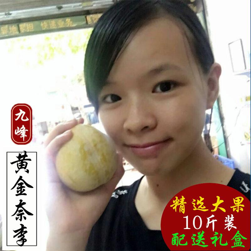 特大九峰黄金奈李 韶关乐昌特产新鲜水果现摘脆甜李子恐龙蛋 十斤