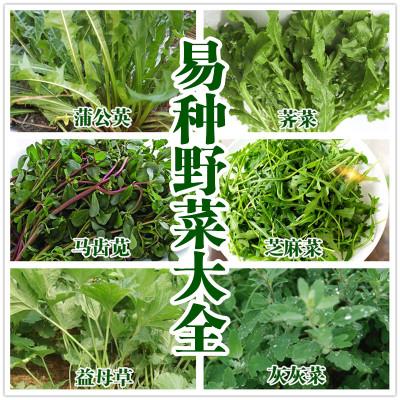 食用野菜野生蒲公英种子大叶荠菜灰灰菜芝麻蔬菜益母草马齿苋包邮