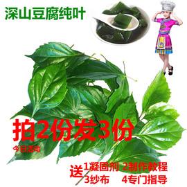 特色野生天然凉粉神仙观音豆腐新鲜树叶 水晶翡翠绿豆腐柴纯叶子图片