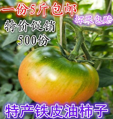 现摘草莓柿子老品种油柿子西红柿番茄新鲜有机水果铁皮洋柿子5斤