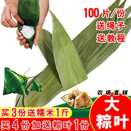 粽叶100张大粽叶烘干大粽子叶新鲜农家自然包粽子皮竹干粽叶免邮