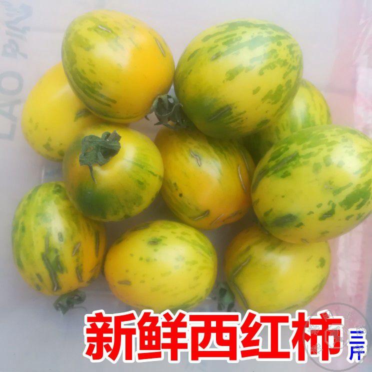 西红柿1500g 小黄番茄 新鲜蔬菜现摘花纹番茄孕妇零食东北小柿子